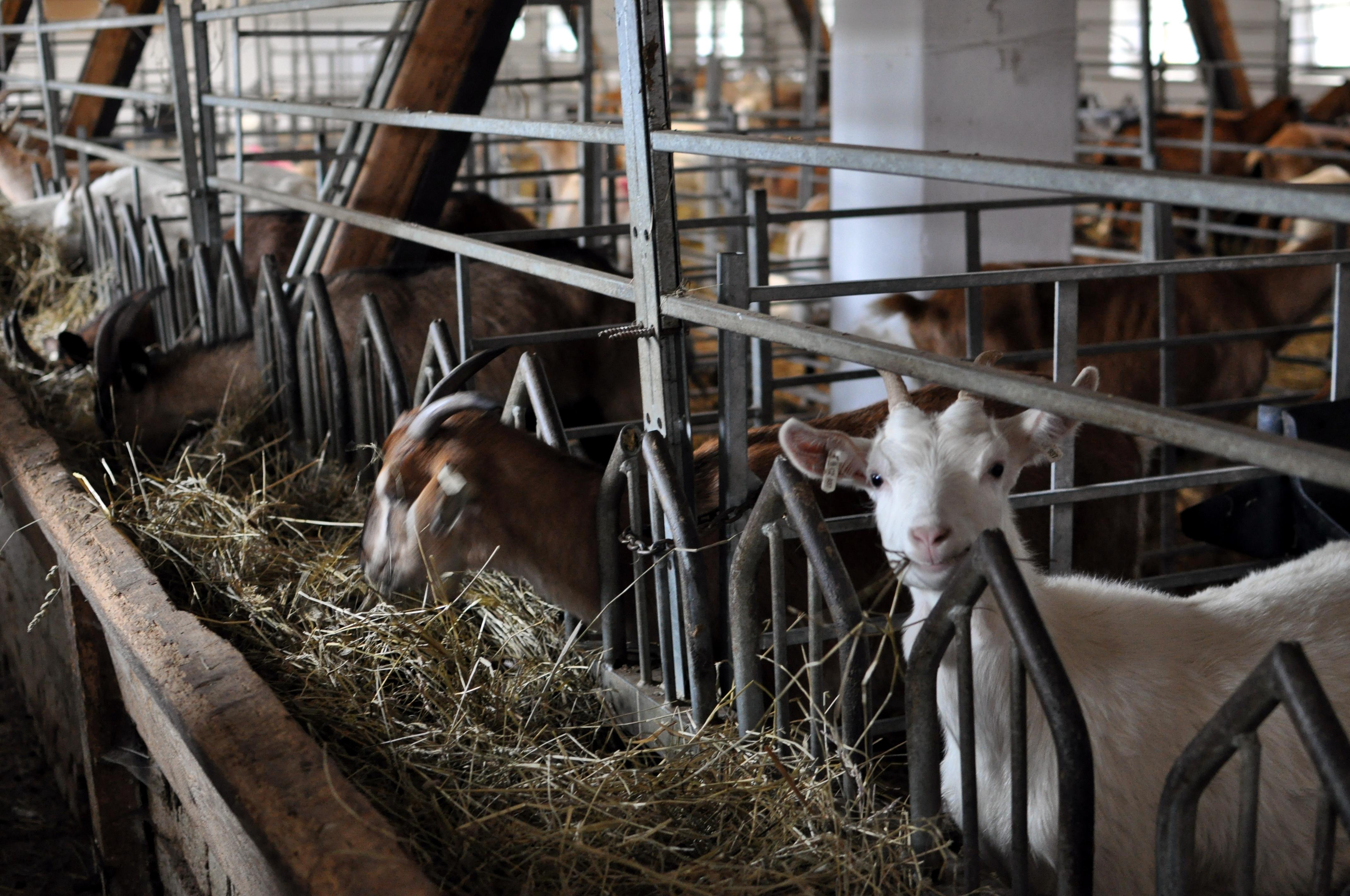 bio kozy
